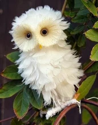 enteresan baykuş resimleri