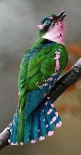 enteresan kuş resimleri 1