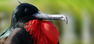 enteresan kuş resimleri12