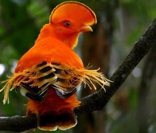 enteresan kuş resimleri14