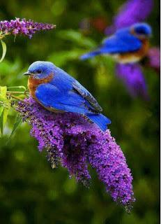 enteresan kuş resimleri4