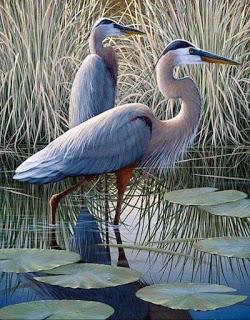 enteresan kuş resimleri7