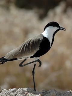 enteresan kuş resimleri9