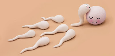 spermlerle i̇lgili bildikleriniz