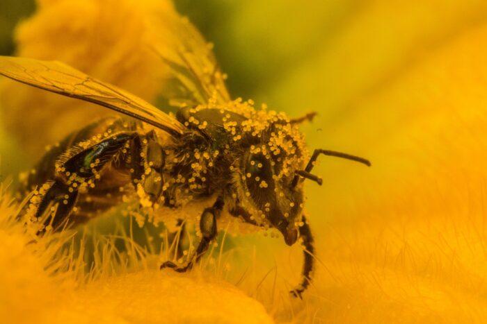arıların doğaya ve insanlara faydaları nelerdir6